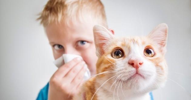 enfant allergique chat