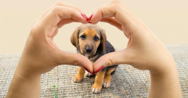 chien amour famille