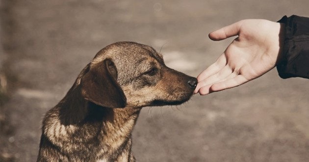 main tendue vers un chien