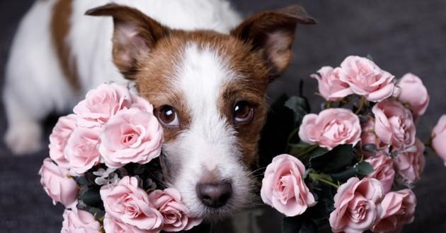 chien avec des fleurs