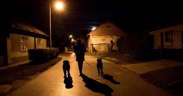 promenade du chien nocturne