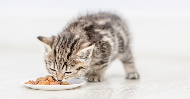 un chaton qui mange de la pâté