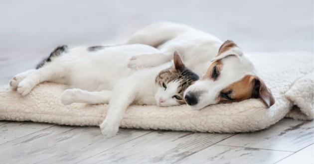 un chat et une chien qui font la sieste ensemble