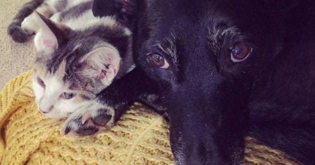 chien et chat qui font la sieste ensemble