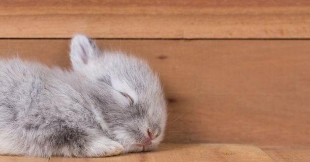 un lapin qui dort