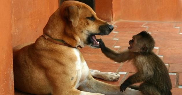 une chienne et un singe