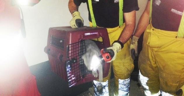 chat sauvé conduit ventilation