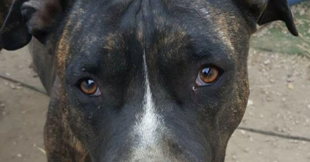 Sky chien tué par balle