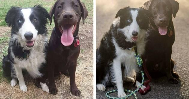 Skye et Koda les deux chiens heureux