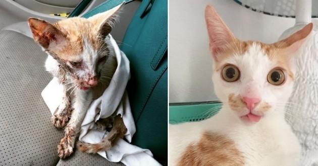 De la rue à la douceur d'un foyer, découvrez l'histoire de Smeagol le chat