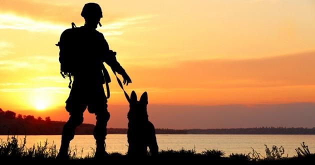 un chien et un soldat devant un coucher du soleil