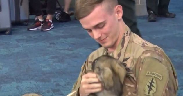 Après des mois d'absence, ce soldat américain est enfin réuni avec sa chienne qu'il avait adopté en Syrie