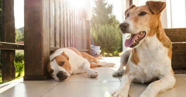 chien au soleil
