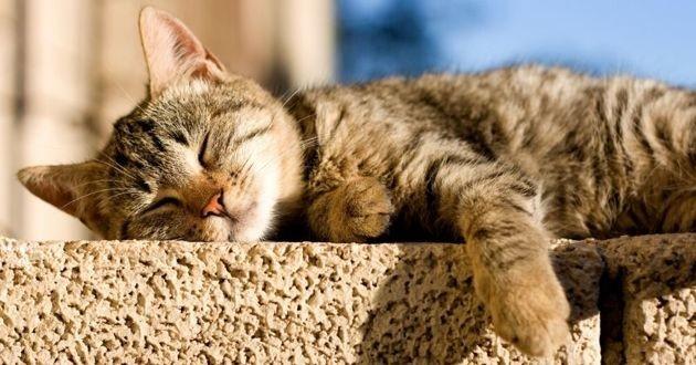 chat allongé au soleil