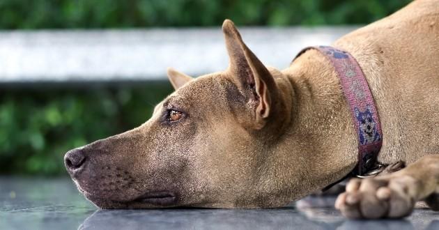 solutions pour sortir le chien de sa déprime