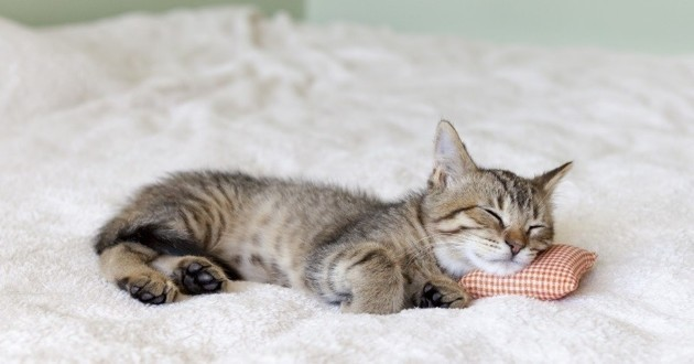 sommeil chat chaton