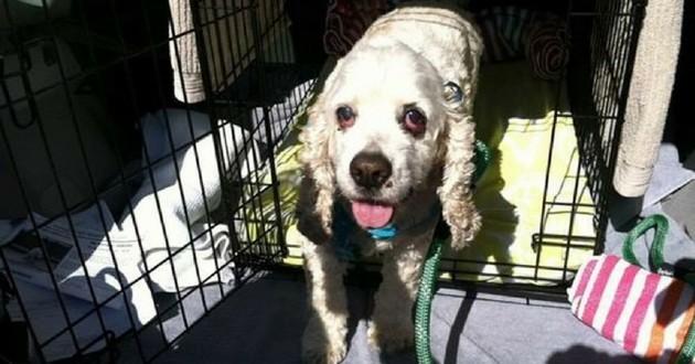 Sonoma vieux chien 20 ans abandonné