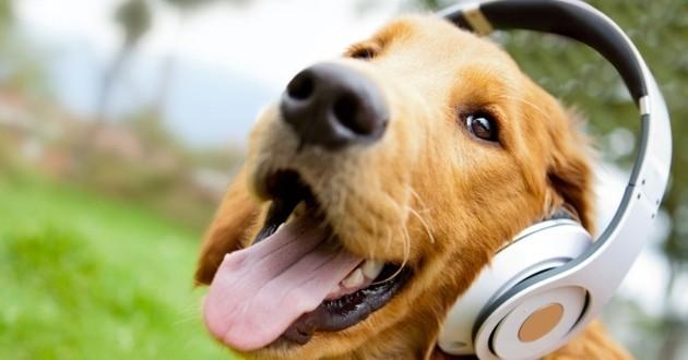 chien casque musique
