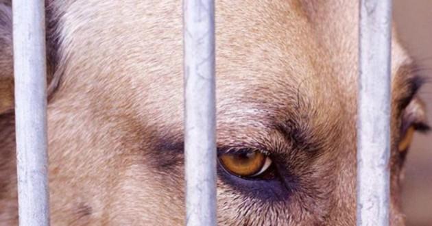 chien dans une cage à la spa