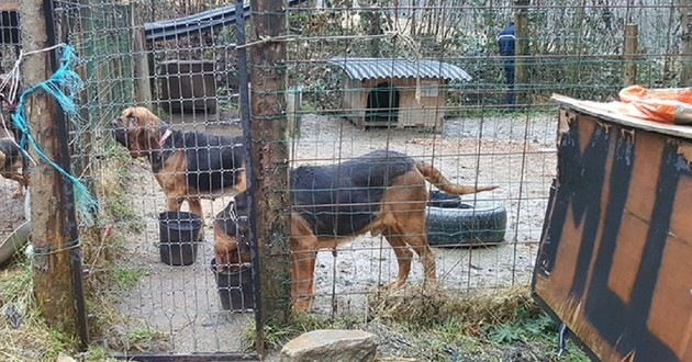 chiens victimes cruauté