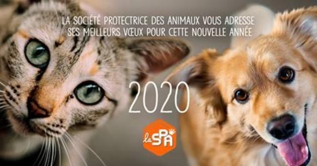 https://static.wamiz.fr/images/news/facebook/article/spa-fb-5e1877fea1898.jpg