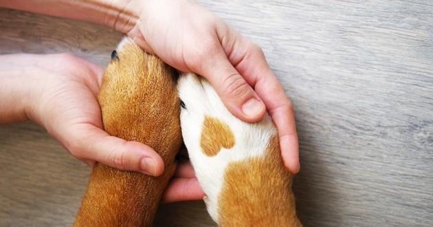 pattes chien coeur