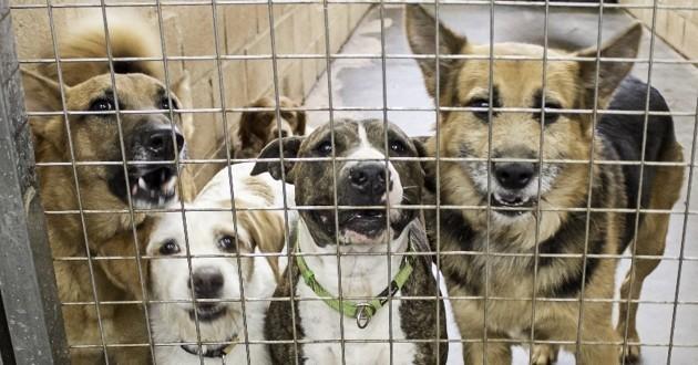chiens abandonnés