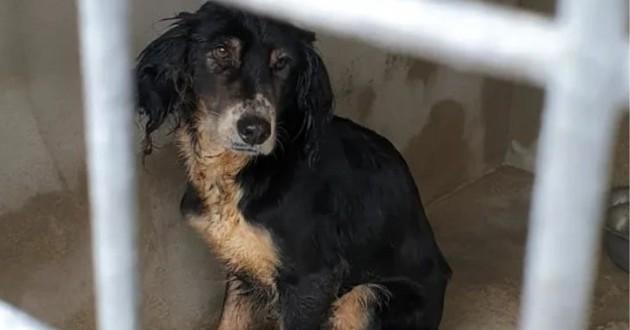 Landes : la SPA sauve 17 chiens maltraités et lance une cagnotte en ligne pour les aider