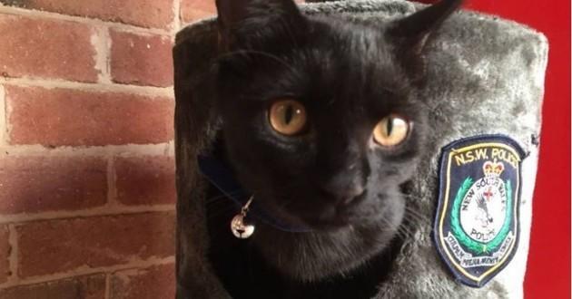 chat adopté police australie