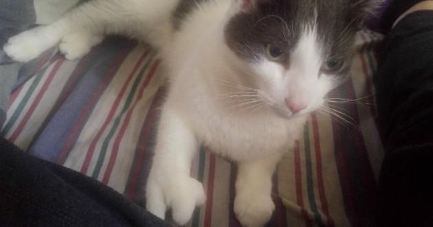 chat pattes déformées