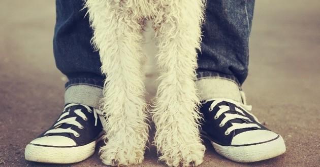 saint raphaël guide pratiques chien