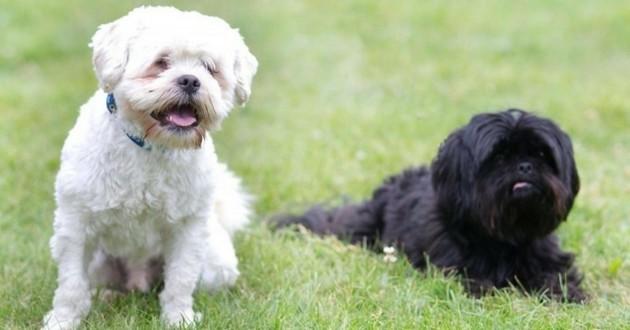 chien aveugle et son père