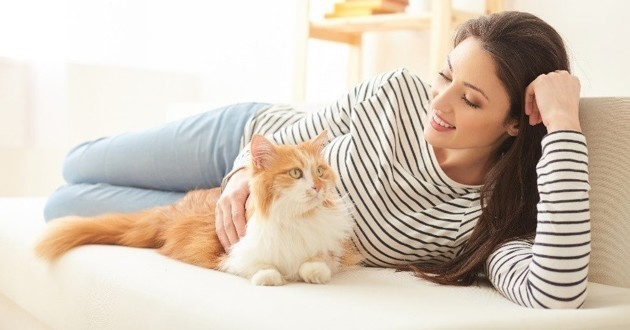 stimuler chat appartement jouer
