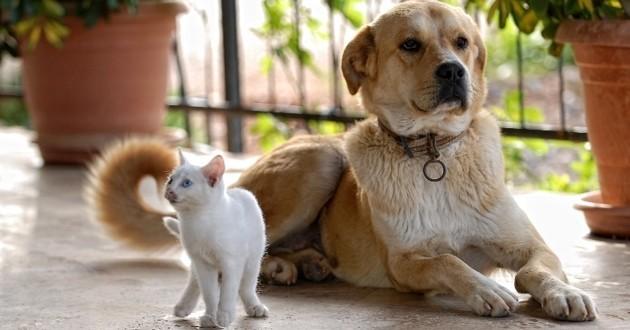 Chats et chiens amis Français