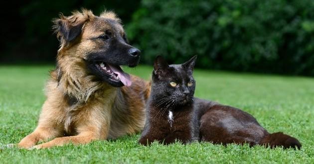 bien-être chiens chats