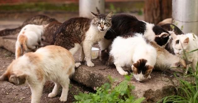 chats dans une maison