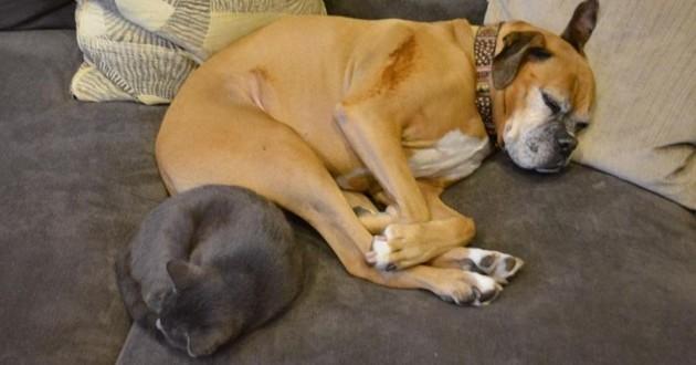 un chien et un chat qui dorment