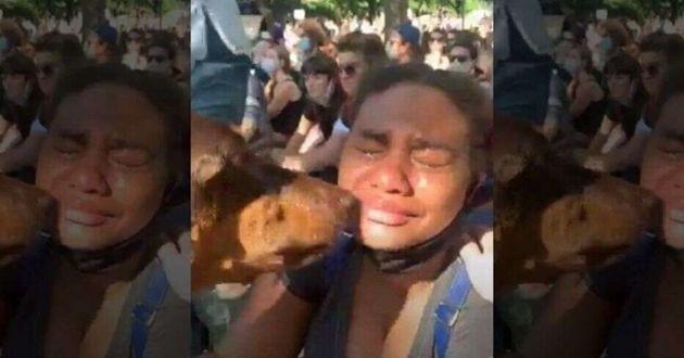 dobermann qui réconforte une femme qui pleure