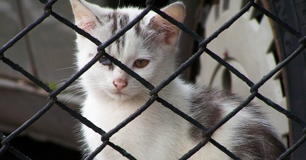 chats livrés à eux-mêmes