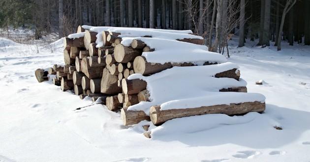 bois dans la neige