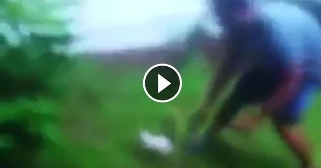 chaton taser