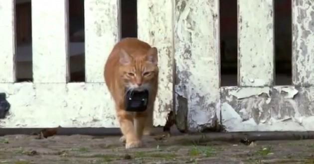 Une télé-réalité pour chats