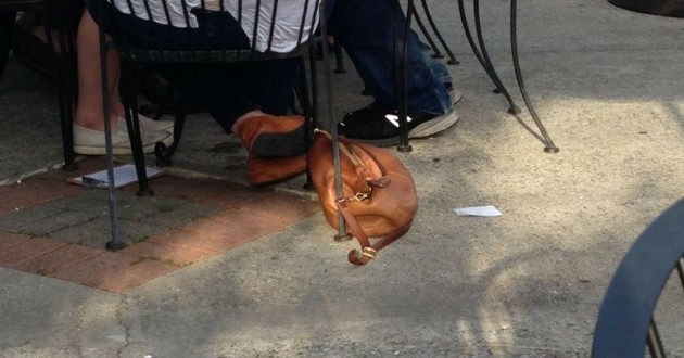 chien sac à main
