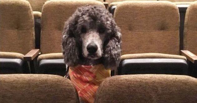 un chien au theatre