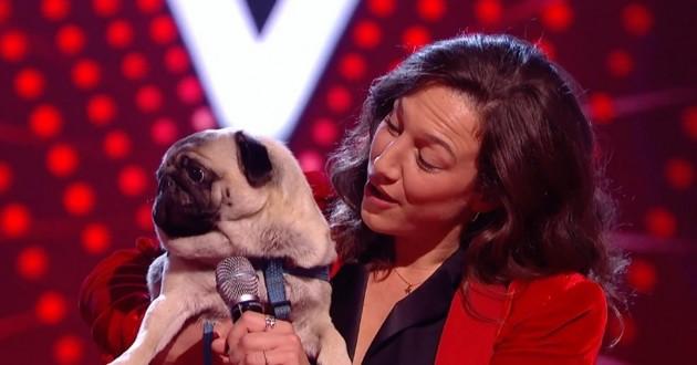 chien qui chante dans the voice