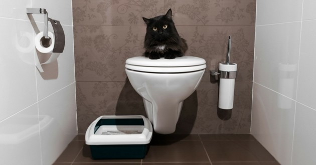 toilettes chat
