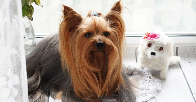 Toilettage pour chien : 3 bons plans pour la maison à petits prix