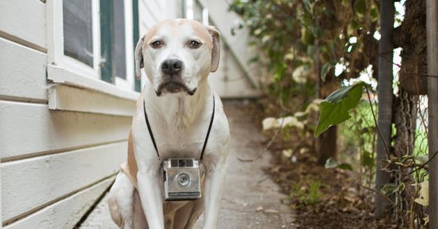 Top 5 des objets connectés qui ont du chien !