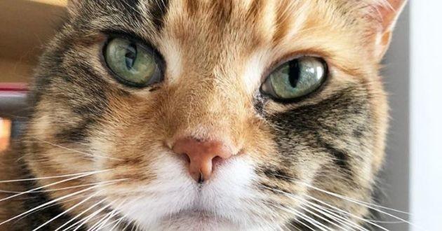un chat torbie