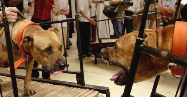 Torture chien musée Guggenheim new york